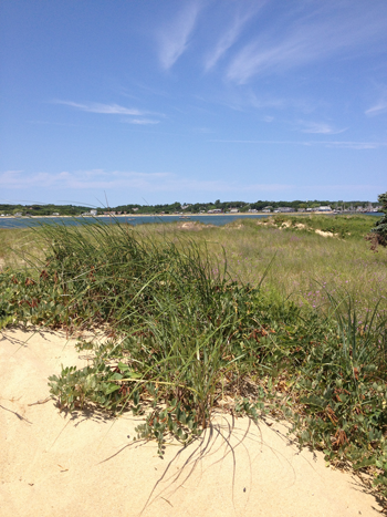 Wellfleet Beach