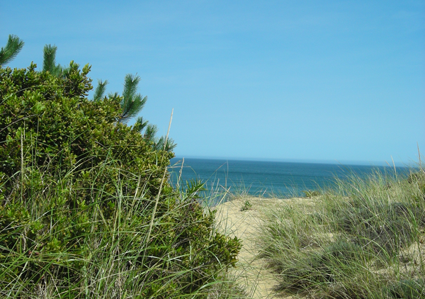 Whitecrest Beach, Wellfleet